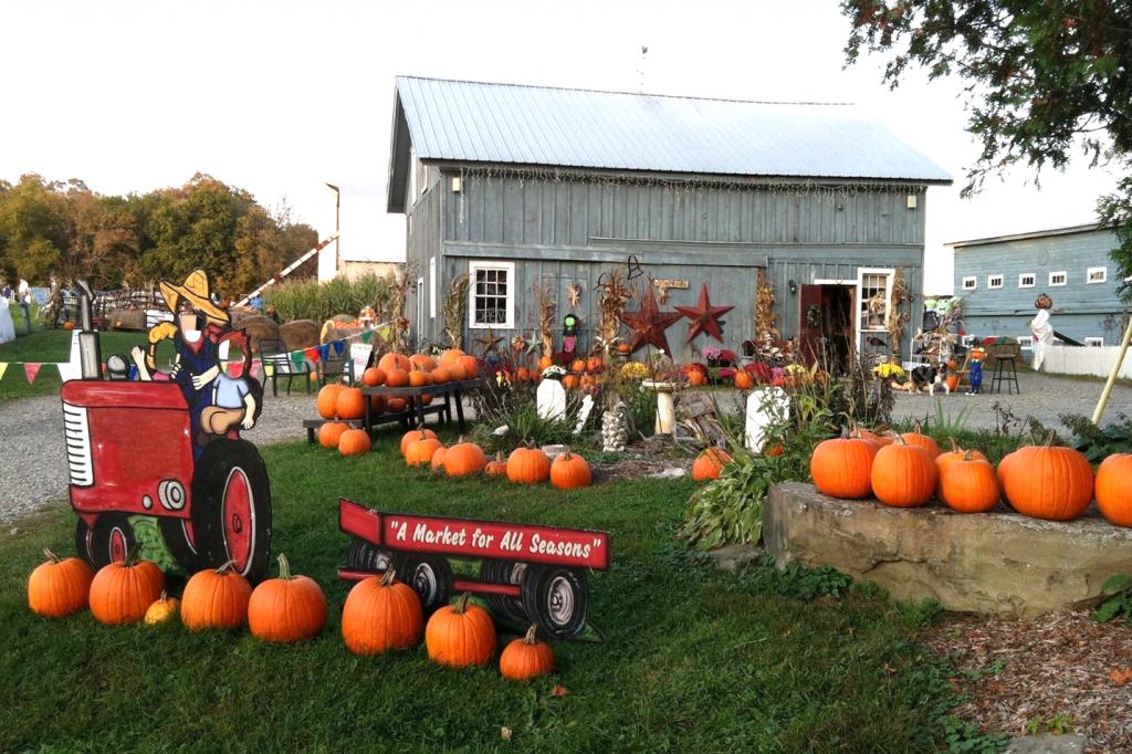 pumpkin display at Pierson's Farm