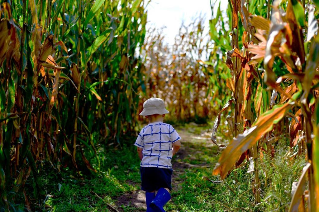 little boy running through corn stalks at Dr. Davies Farm